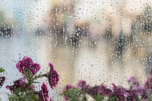 雨が降っている写真