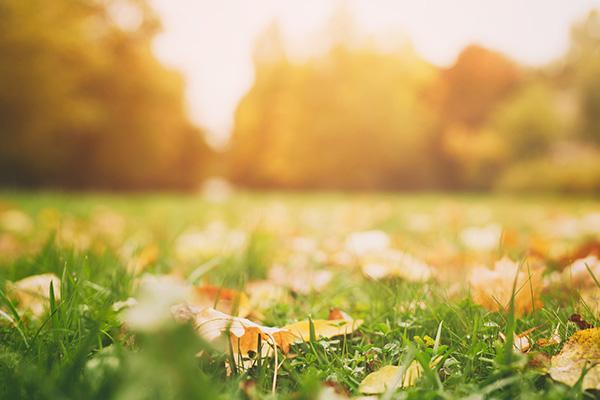 肌トラブルの秋