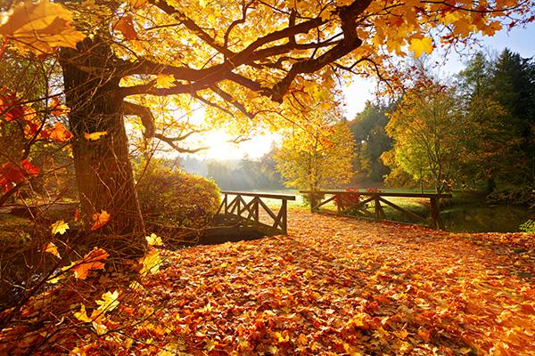 秋冬も日傘を